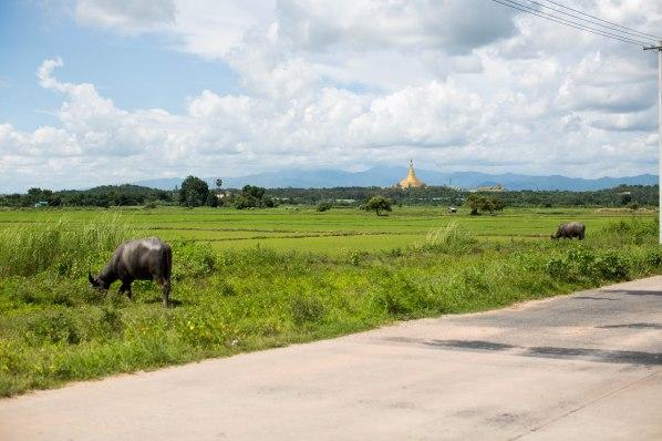 Nay Pyi Taw