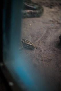 Zoo, Nay Pyi Taw