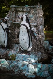 Les fameux pingouins... Morts.