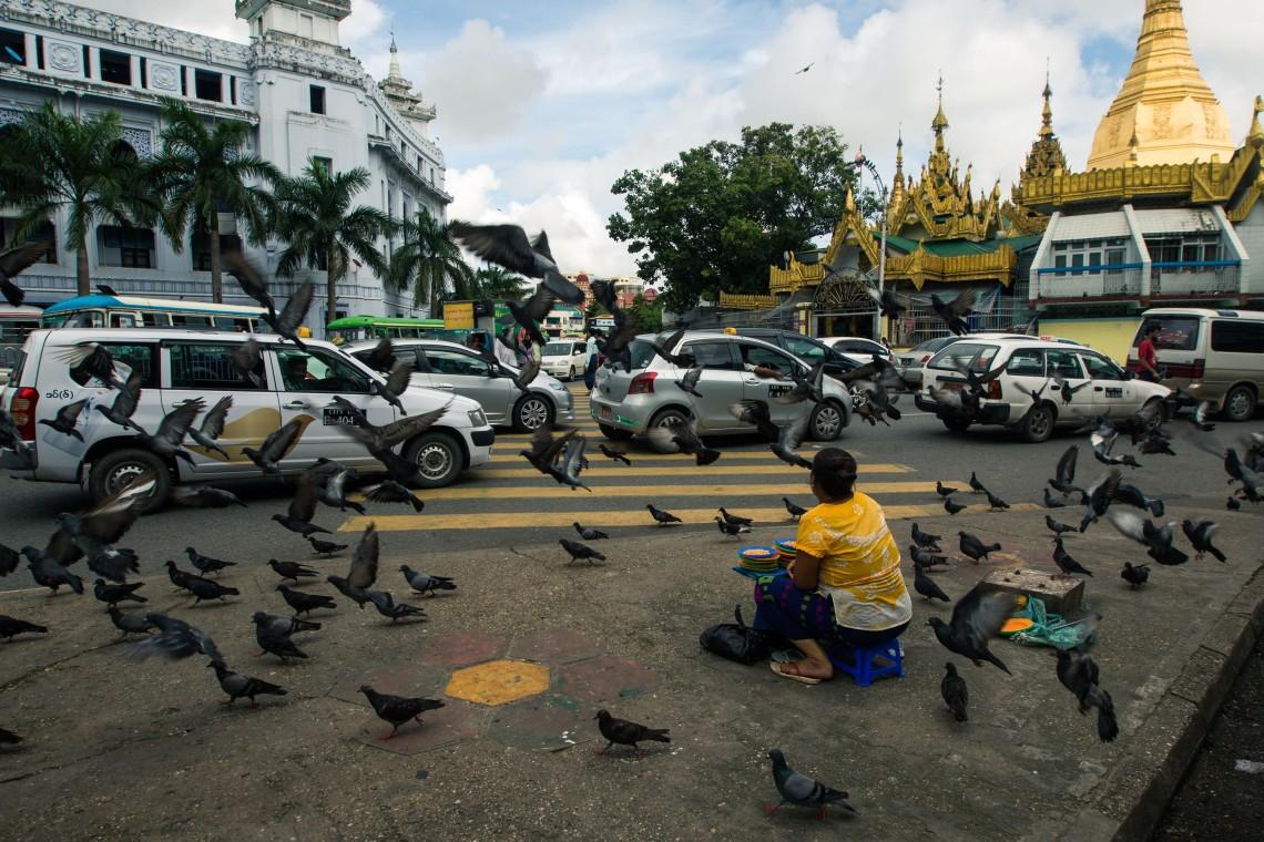 Les pigeons de la Sule Pagoda, Yangon
